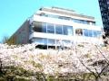 Blossom Terrace